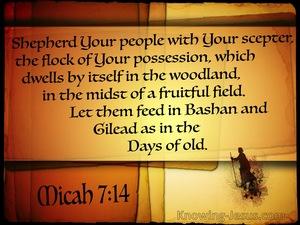 Micah 7-14 Shepherd Your People brown