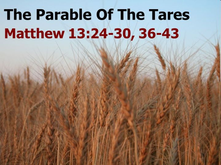 The Wheat and theTares
